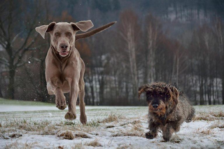Myśl jak pies. Bądź wspaniałym właścicielem zwierząt domowych.